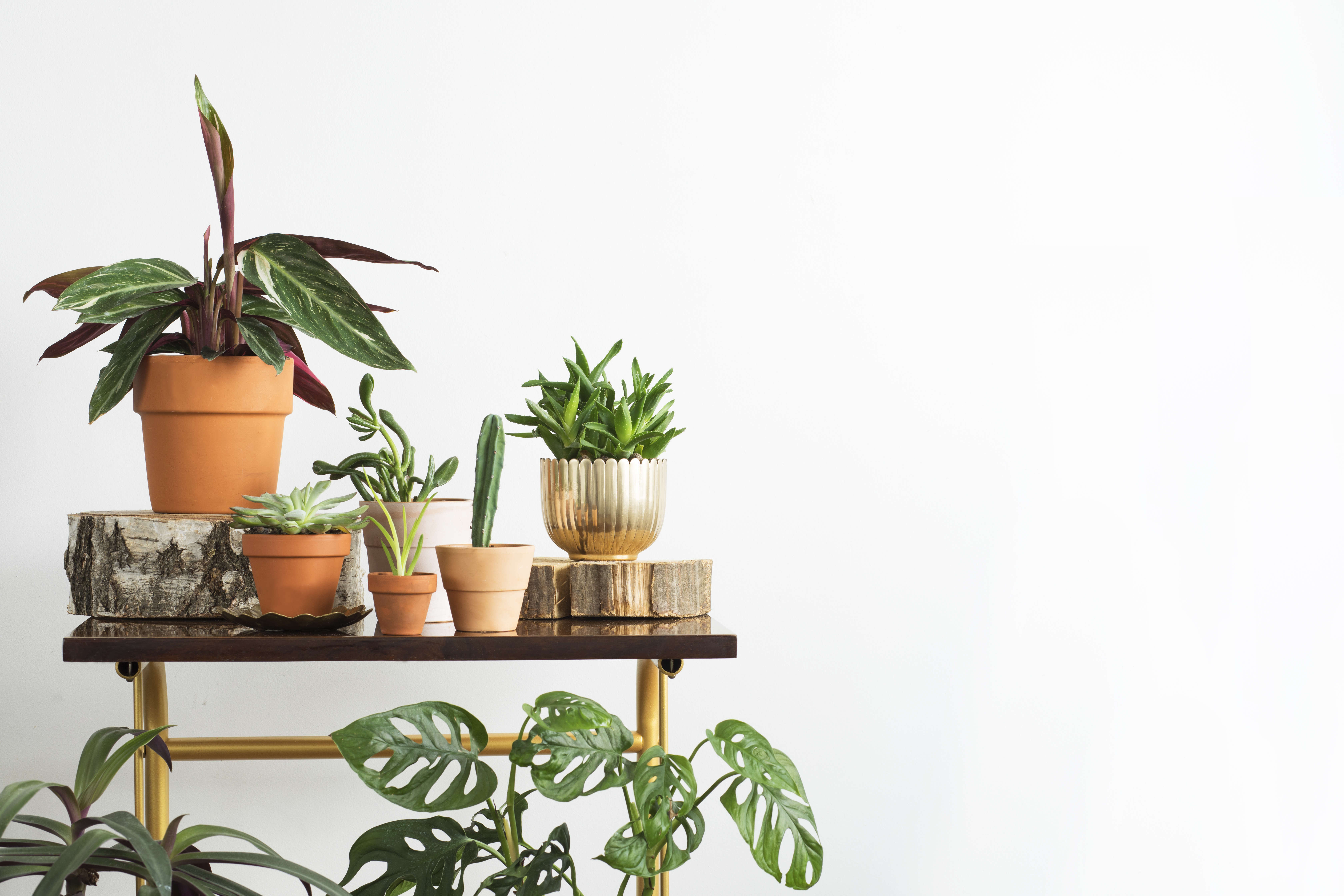 blog image of indoor plants; blog title: 5 Indoor Plants That Decorate and Purify Your Apartment